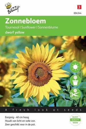 Zonnebloem (Helianthus) Dwarf Yellow