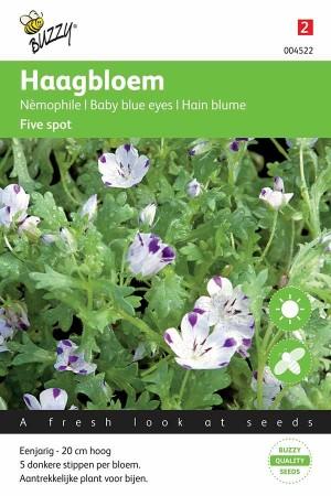 Haagbloem (Nemophila Insignis) Five spot