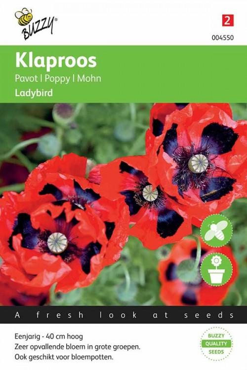 Poppy (Papaver) Ladybird