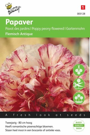 Poppy (Papaver) Flemisch Antique
