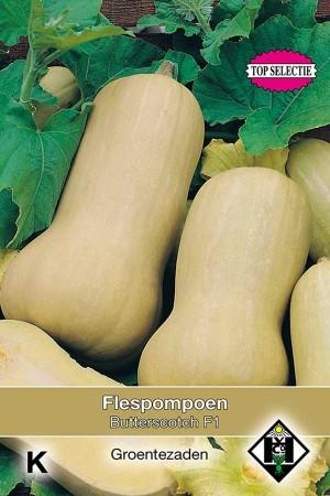 Pompoen - Kalebas Butterscotch F1 - Flespompoen Butternut