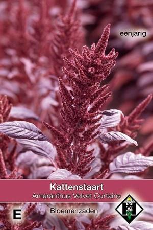 Kattenstaart (Amaranthus) Velvet Curtains Amaranthus