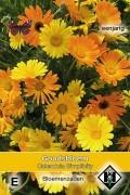 Goudsbloem (Calendula) Simplicity - Calendula officinalis
