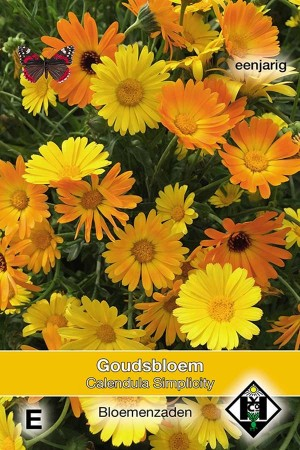 Marigold (Calendula) Simplicity - Calendula officinalis