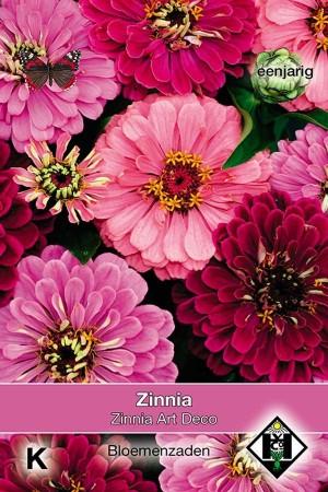 Zinnia Art Deco - Zinnia elegans