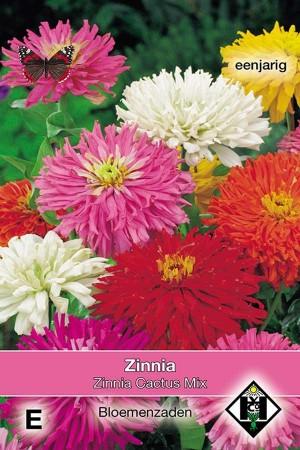 Zinnia Cactus Mix - Zinnia elegans