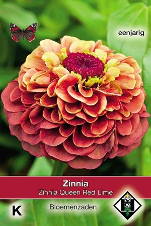 Zinnia Queen Red Lime - Zinnia elegans