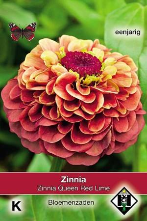 Zinnia Queen Red Lime - Zinnia elegans