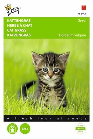 Overige Zaden Kattengras - Gerst