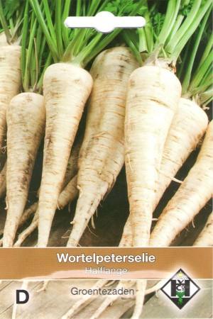 Parsley Parsley Root