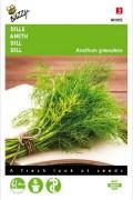 Dille - Anethum Graveolens