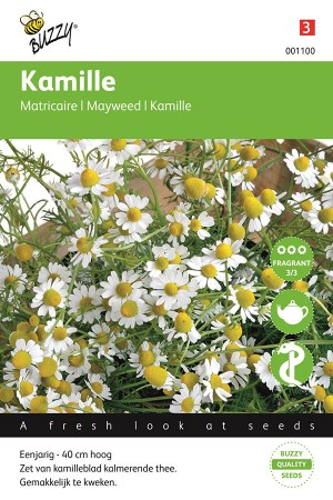 Scented Mayweed - Camomille...