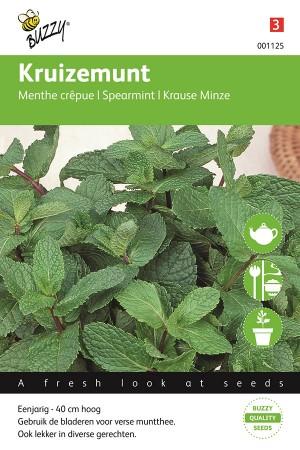 Kruizemunt - Groene Munt