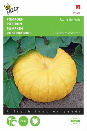 Jaune de Paris - yellow giant pumpkin