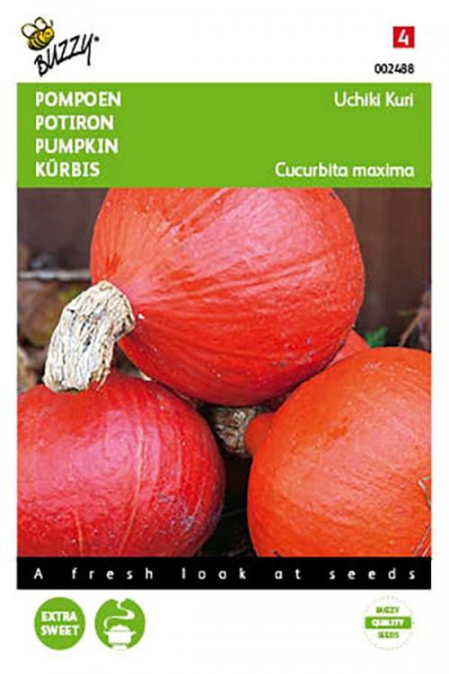Uchiki Kuri pumpkin seeds