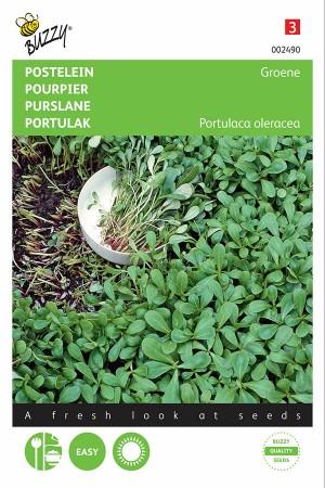 Green Purslane