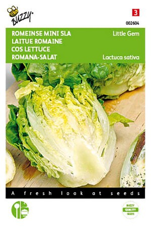 Cos Lettuce Little gem