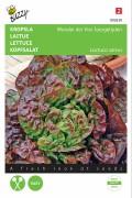 Wonder of Four Seasons lettuce