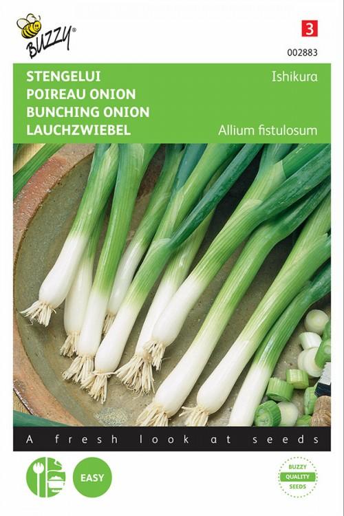Spring Onion Ishikura