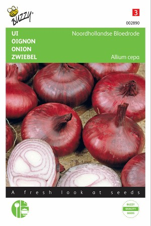 Dutch Bloodred onion seeds - Improved Brunswick