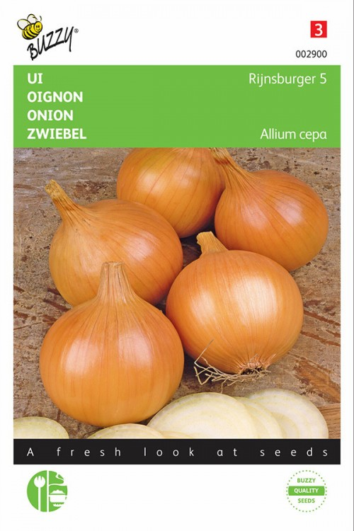 Rijnsburger 5 yellow onion seeds