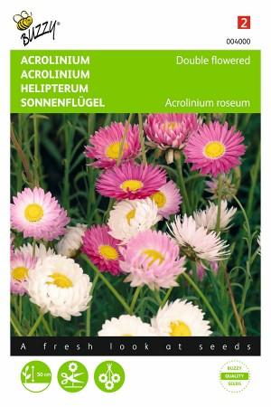 Acroclinium Dubbelbloemig -...