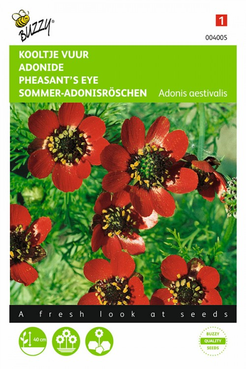 Red Phaesants Eye - Adonis seeds
