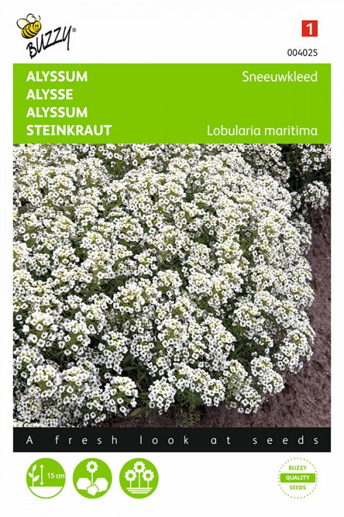 Snowcloth - Sweet Alyssum seeds