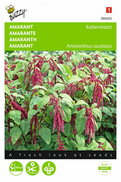 Love Lies Bleeding Amaranthus seeds
