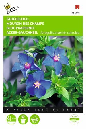Blauw Guichelheil