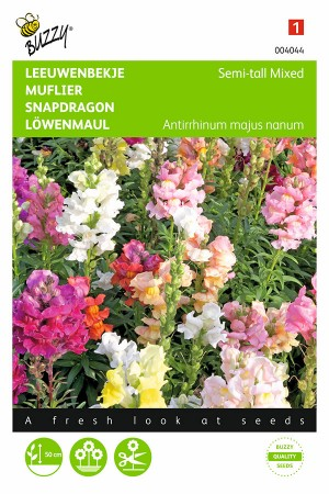 Semi-tall mixed Antirrhinum...