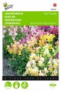 Tom Thumb Antirrhinum Snapdragon seeds
