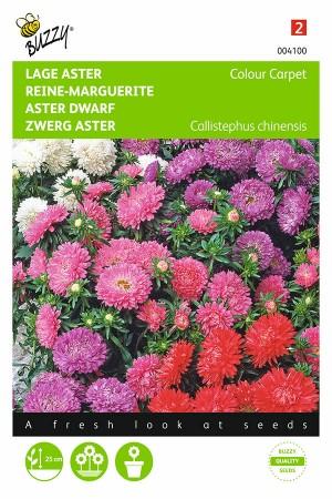 Colour Carpet - Aster seeds