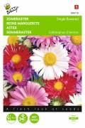 Single Rainbow - Aster seeds