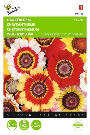 Bonte Ganzenbloem Chrysanthemum zaden
