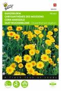 Gele Tinten Ganzenbloem Chrysanthemum zaden