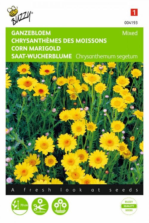 Yellow Shades Corn Marigold Chrysanthemum seeds