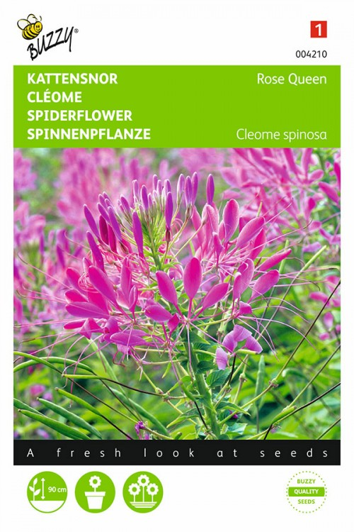 Pink Queen Cleome - Spider Flower seeds