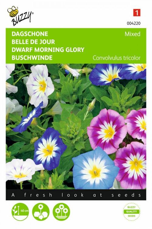 Morning Glory Convolvulus seeds