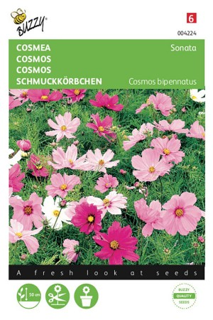 Sonate Cosmos seeds