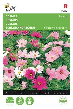 Sonate Cosmos seeds