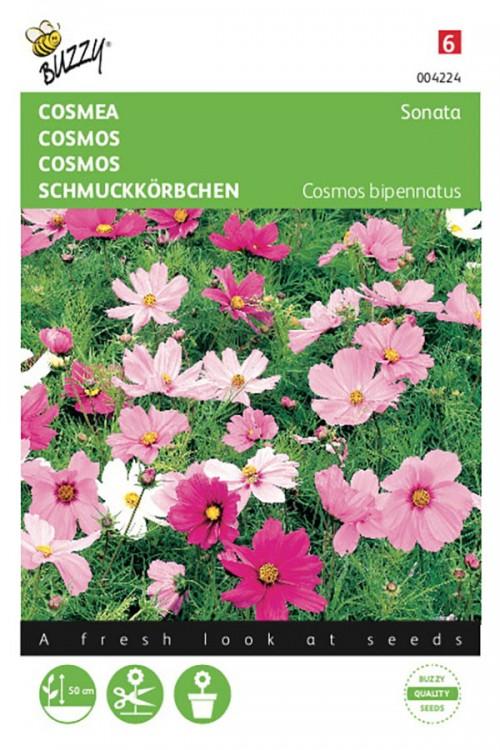 Sonata Cosmea zaden
