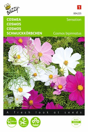 Sensation Cosmos seeds