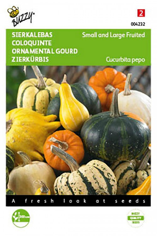 Mixed small and large ornamental gourds