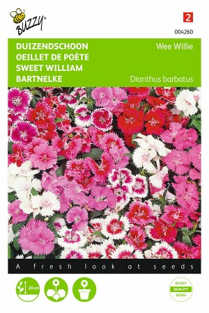 Wee Willie - Sweet William...