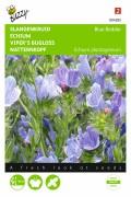 Blue Bedder Viper's Bugloss Echium seeds