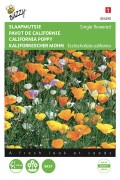 Single California poppy Eschscholtzia seeds