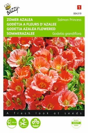 Salmon Princess - Godetia...