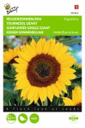 Giant Sunflower Helianthus seeds