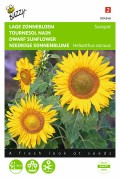 Sunspot Sunflower Helianthus seeds